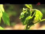 Сад и огород: Огородные вредители [2012-2013] SATRip