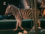 Скачать фильм Украли зебру (1972)
